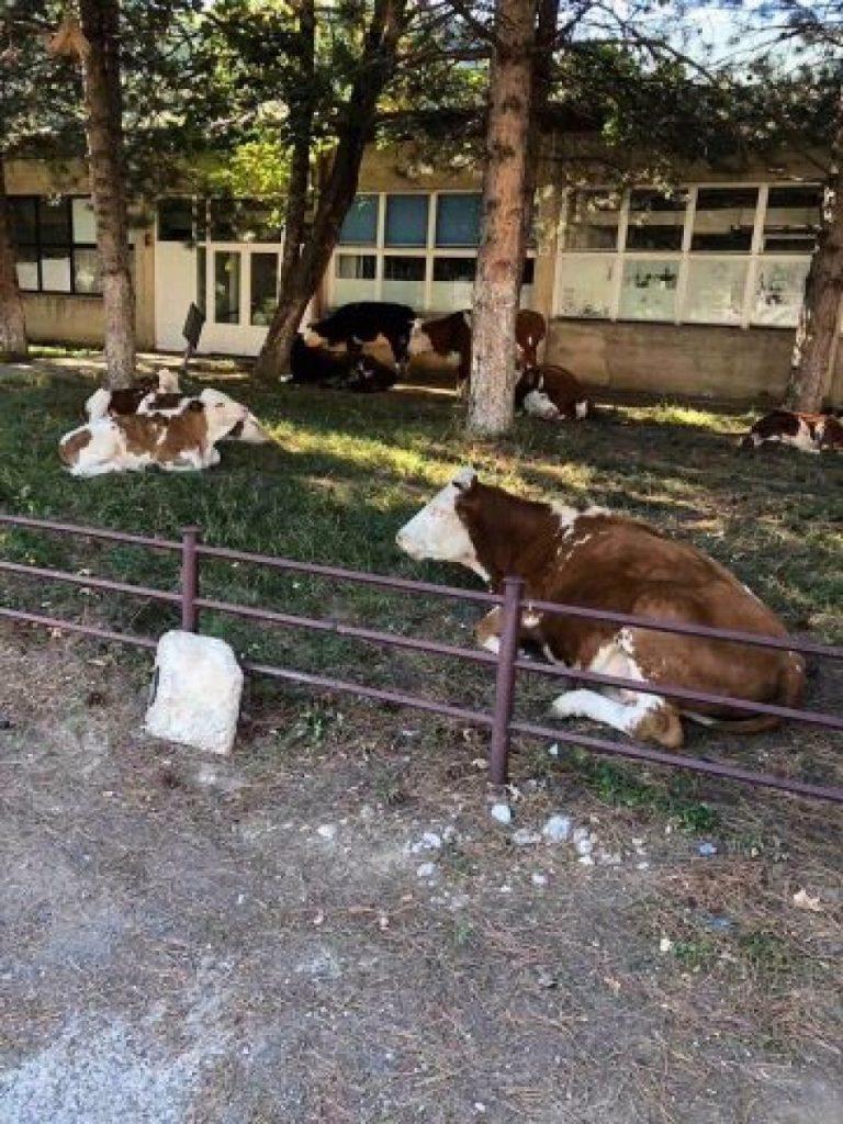 lopët