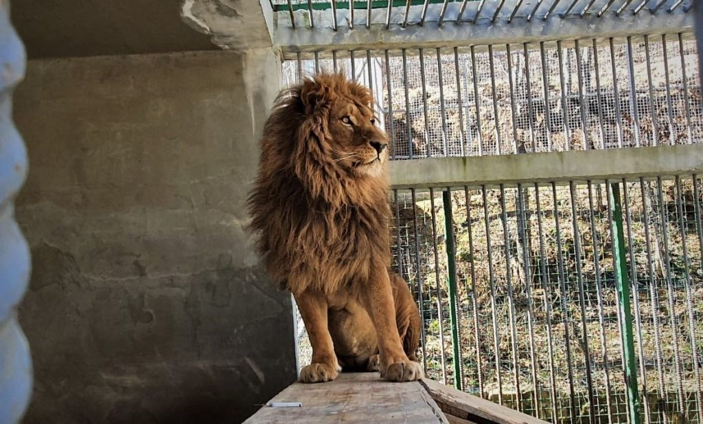 Luani